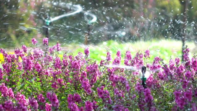 L'eau d'arrosage des fleurs dans le jardin - Vidéo