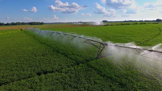 sprinkler gießen field - bewässerungsanlage stock-videos und b-roll-filmmaterial