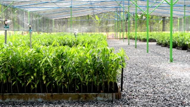 vídeos y material grabado en eventos de stock de espolvorear tierras de labrantío en el sistema de máquina - botánica