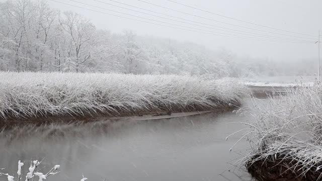 トウヒ多くのコーンズで、吹雪。 - シベリア点の映像素材/bロール