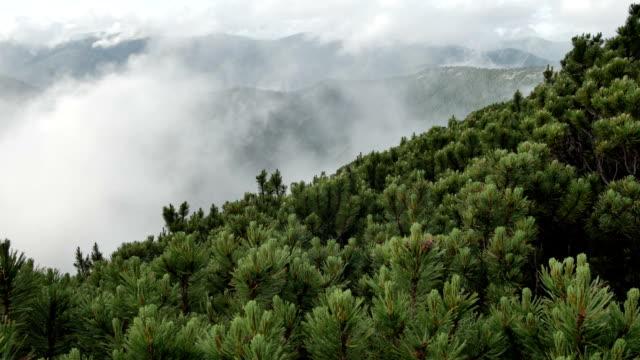 świerk z stożkami na szczycie góry na tle szybko biegnących chmur. płynny ruch - mountain top filmów i materiałów b-roll