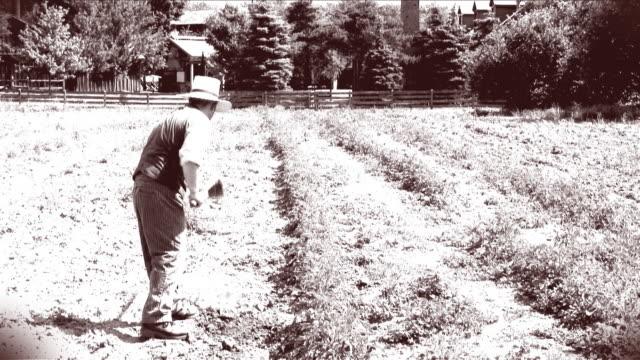 serie spud agricoltura 02 - stile del xix secolo video stock e b–roll