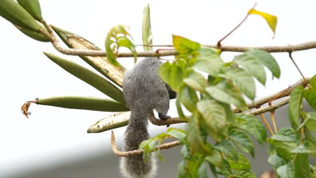 squirrel is eating plant video