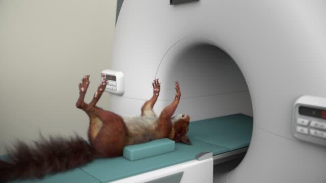 vidéos et rushes de irm d'écureuil - image par résonance magnétique