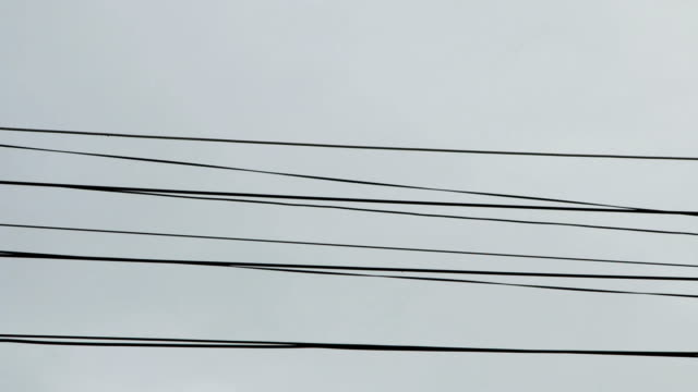 squirrel running on wire - filo metallico video stock e b–roll