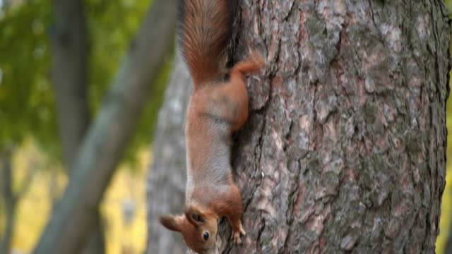 squirrel sits on tree and eats from the trough video