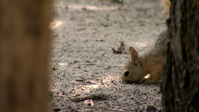 squirrel - nuts 個影片檔及 b 捲影像