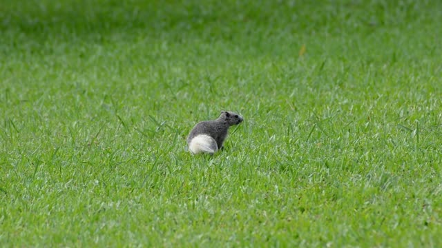 Squirrels are active in the grass field The park is surrounded by natural beauty.