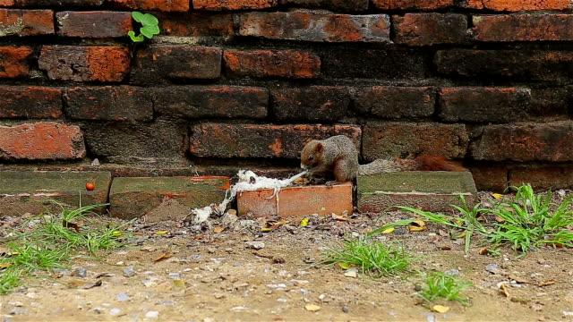 Squirrels eat