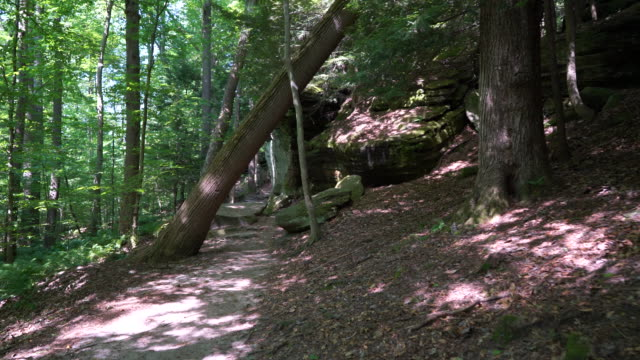 stabilized shot hiking through forest under a tree near large rocks - parco nazionale video stock e b–roll