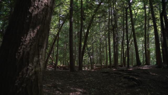 vídeos de stock, filmes e b-roll de tiro estabilizado, movendo-se através de uma linda floresta - nordeste