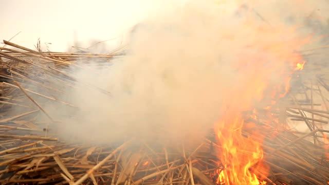 vidéos et rushes de pile d'herbe sèche sur le feu - foin