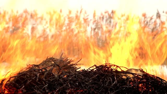 vidéos et rushes de pile de l'herbe sèche sur le feu - foin