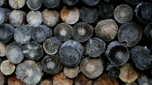 A Stack Of Firewood. Firewood Background Texture A Stack Of Firewood. Firewood Background Texture 天の川 stock videos & royalty-free footage