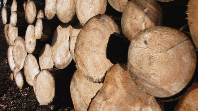 Stack of Sawed Tree Trunks in the Forest Stack of Sawed Tree Trunks in the Forest biomass renewable energy source stock videos & royalty-free footage
