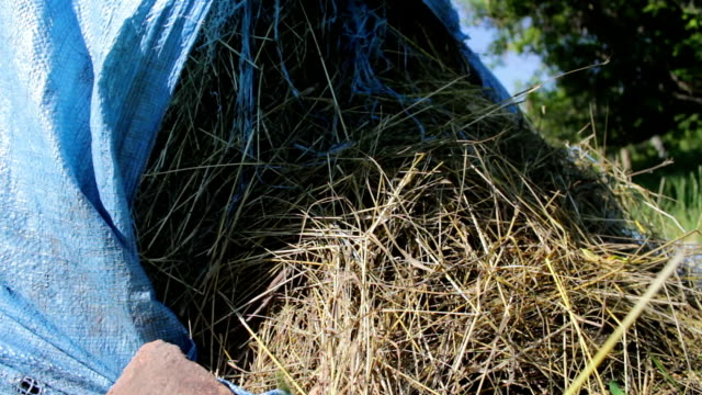 stack of straw or hay is covered with blue polyethylene in the open air in summer - tramadol стоковые видео и кадры b-roll