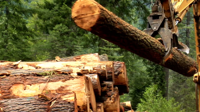 stockvideo's en b-roll-footage met stacking the timber - boomstam