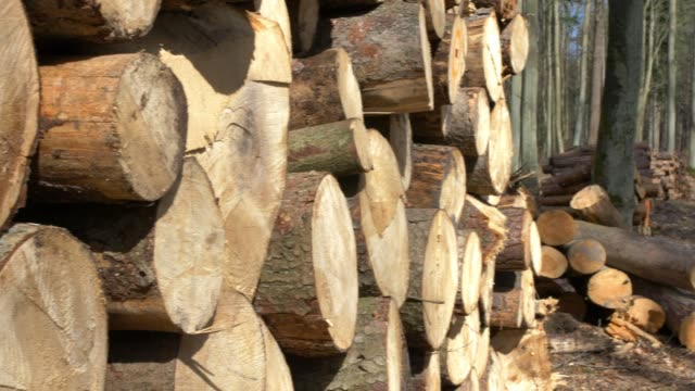 stacks of sawed tree trunks in the forest - биомасса возобновляемая энергия стоковые видео и кадры b-roll