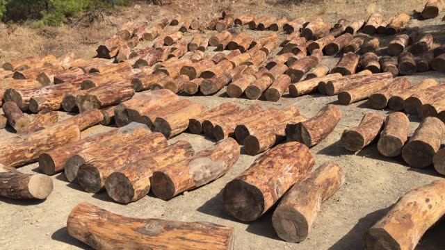 Stacks of tree log in nature