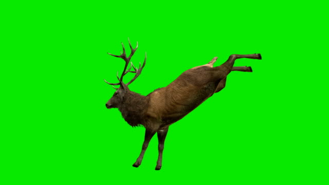 Stag Kick Green Screen (Loopable) video