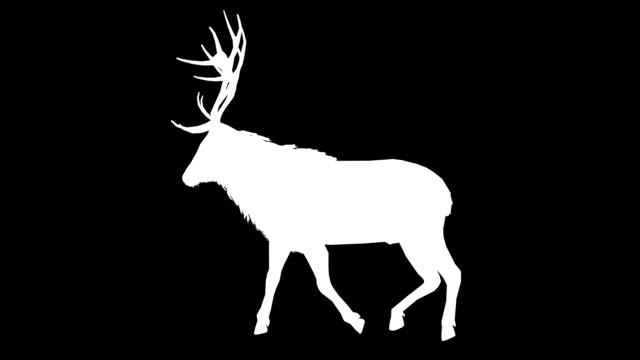 jeleń spaceru sylwetka (z pętlą - jeleniowate filmów i materiałów b-roll