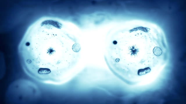 Stages of mitosis. Biology background. Blue.