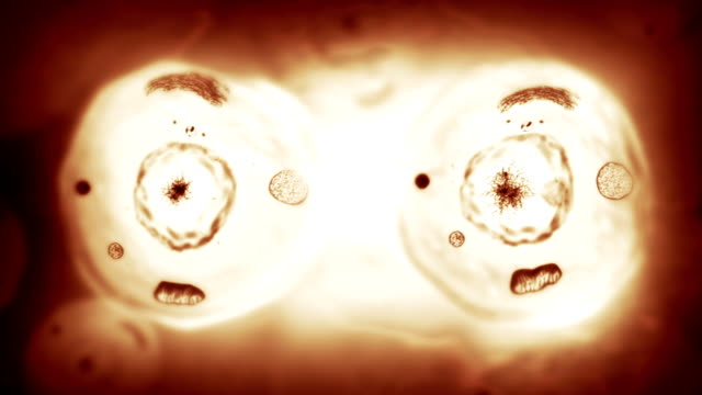 Stages of mitosis. Biology background. Brown. video