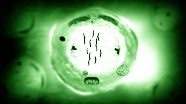 Stages of mitosis. Biology background. Green. video