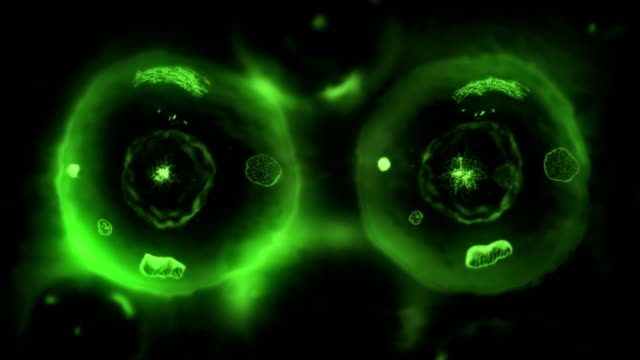Stages of mitosis. Biology background. Green/Black.