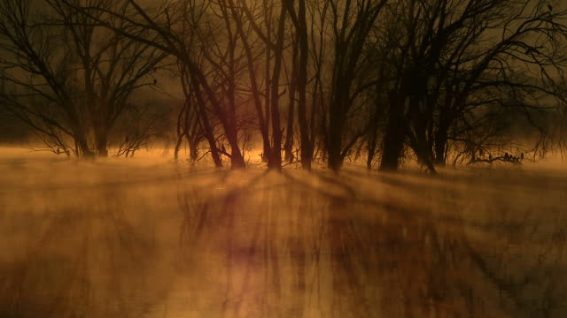 stained dawn mists video