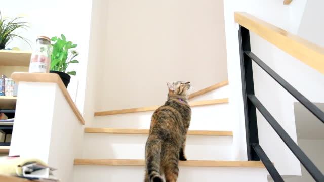 trappor - katt inomhus bildbanksvideor och videomaterial från bakom kulisserna
