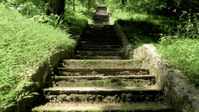 Stairs in tropical rainforest at summer day - Batumi, Georgia video