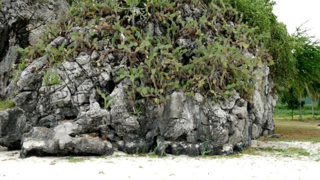 Stalactite stalactites slider shot. video