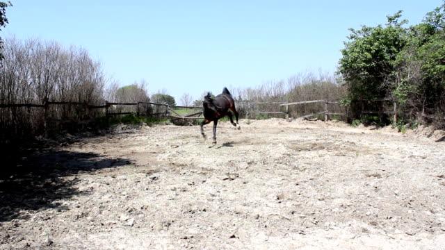 stallion running and kicking stallion running and kicking kicking stock videos & royalty-free footage