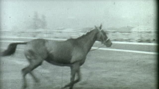 stallion training 1930's - racehorse track bildbanksvideor och videomaterial från bakom kulisserna