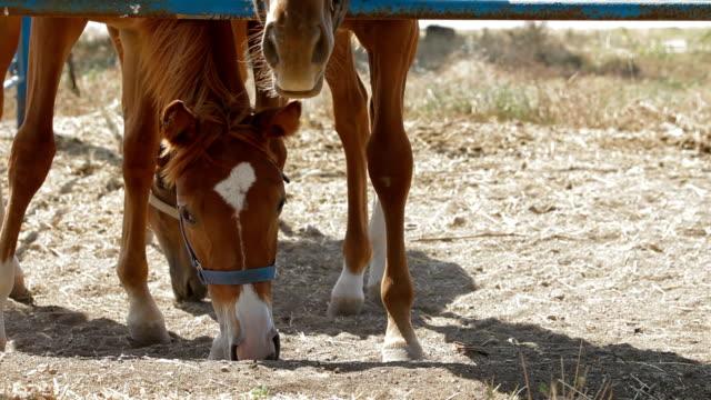 stallions chodzić w padok - grzywa filmów i materiałów b-roll