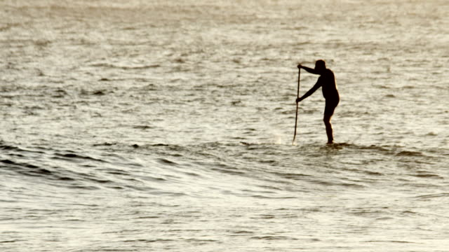 Stand Up Paddle boarder at sunset on ocean video