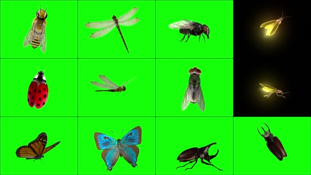 Standing 3D Insects