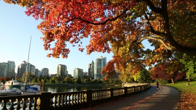 Stanley Park, Autumn Seawall, Vancouver An early morning jogger on the Stanley Park Seawall in autumn. Vancouver, British Columbia, Canada. vancouver canada stock videos & royalty-free footage