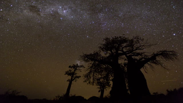 Star time-lapse, milky way galaxy over Baobab trees, Botswana video