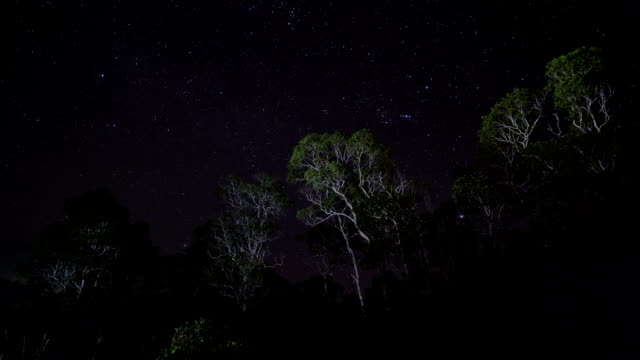 Star trail over forest video