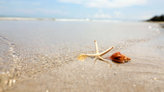 starfish and seashell on sand beach , fresh tropical summer background   , 4k dci resolution - раковина животного стоковые видео и кадры b-roll