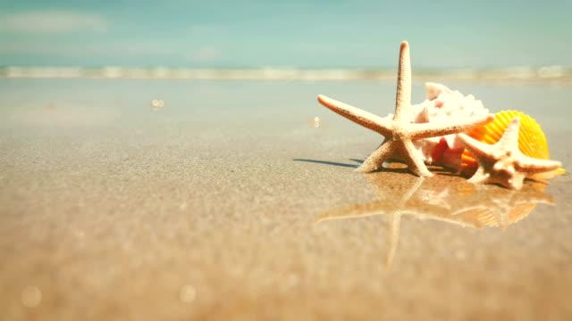 vidéos et rushes de étoile de mer et coquillage sur la plage de sable, fond frais d'été tropical, résolution de 4k dci - coquillage