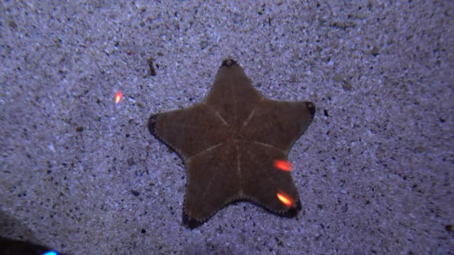 starfish lying on the sandy bottom. marine life close-up - immerse in the stars video stock e b–roll