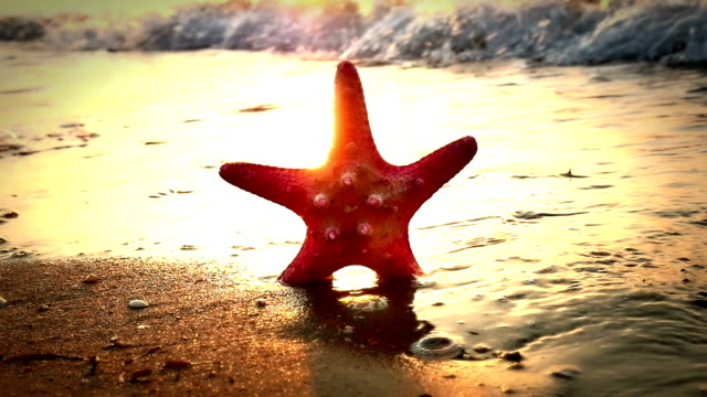 starfish on beach sunset video