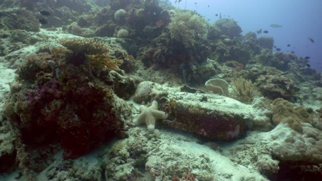 stella di mare di corallo - immerse in the stars video stock e b–roll