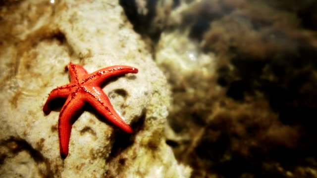starfish sunbathing video