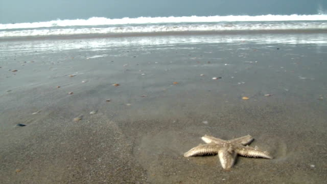 Starfish video
