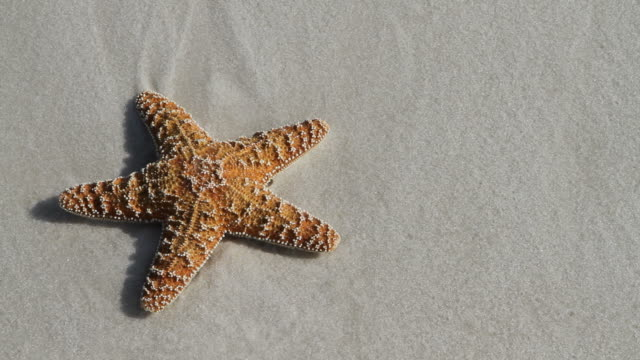 Starfish Washed Away video