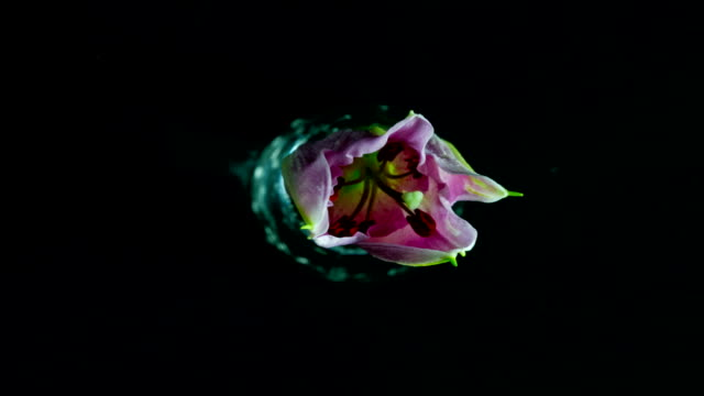 Stargazer - Pink